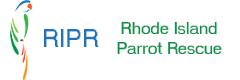Rhode Island Parrot Rescue