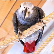 Raising Standards of Exotic Bird Care